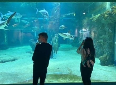 Visite de l'aquarium du Grau du Roi